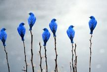Birds of a Feather / Be as a bird perched on a frail branch that she feels bending beneath her, still she sings away all the same knowing she has wings     - Victor Hugo / by Jennifer Henderson