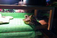 Aqua turtles χελωνιτσες νερου ενυδρεία aquarium