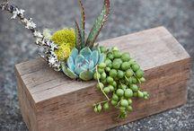 vasi fichissimi per piante