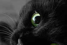 amo i gatti neri