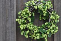 Hops / by Judy Lies