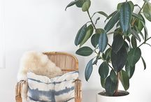 Plant Inspiration / Trending plants for home decor