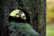 Fungi Among Me