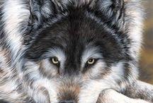 Il lupo,animale meraviglioso / Noi amiamo i lupi