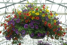 Great Plants!