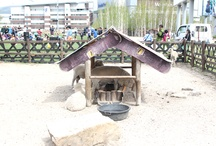 Mountain Plaza'S Mini Animal Farm / [Mountain Plaza'S Mini Animal Farm] ; Photo sketch in the High 1 Ski Resort in Jungsun, South Korea on May 24th, 2013.  English homepage.  http://www.high1.com/Hhome/main.high1 Korean homepage. http://www.high1.com/Hhome/main.high1 Blog.   http://blog.naver.com/high1cs FaceBook.  http://www.facebook.com/high1forcs Tweeter.  https://twitter.com/