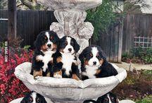Dogs / Hunde