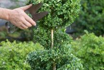 Strzyżenie krzewów