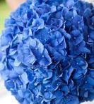 Brudebukett/blomster