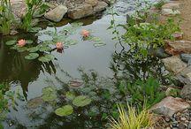 rosenhave projekt