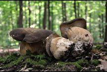 Video. mushrooms #грибы #Fungi / Video. mushrooms #грибы #Fungi