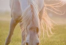 Horses / All kind of horses that we love.