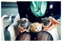 Gatos que adoro