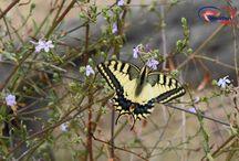 Flora und Fauna Kroatien / Auf dieser Pinnwand findet Ihr Tiere und Pflanzen in Kroatien.