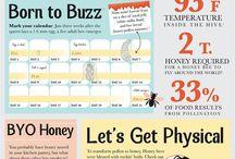 Bees / Bees & beekeeping