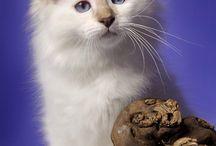 mačiatko / je tam mačiatko s pekným pohľadom!