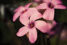Flowers / My flower photos