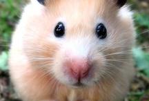 hamsters are soooo cute / hamsters playing having fun