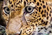 Especies Amenazadas / Especies de Argentina en peligro de extinción
