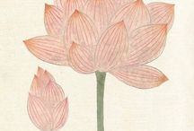 fleurs / water lily - growing making flowers