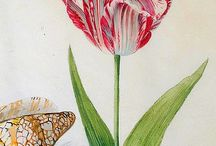 BOTANICAL  PRINTS / by Gayle Diesing