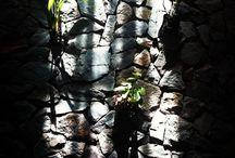 anggrek nempel tembok / mencoba vertikal garden