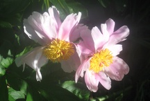 Pretty Flowers / by Vanessa Roca