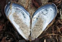 heart shaped photos of fish