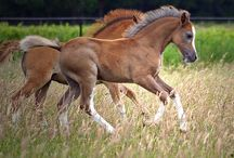 Baby Horses by San / Baby horses, best friends, veulens