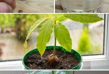 plantas frutas