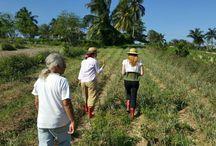Tungasuk / #farmtotable #tungasuk #organicfarm #cuba