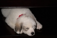 Awwwww cute little animals / by Jessica Crawford