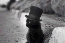 cani gatti & co