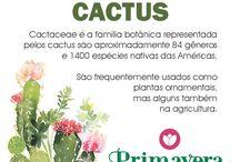 Tudo Sobre Cactus