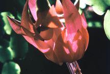 Gymnoccalysium - Mecembryanthema - Epiphyllum - Gliederkakteen / digitalisierte Dias meines Vaters Hans Hermann (1926-2001)
