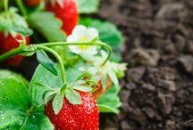 Gardening/Outdoor Spaces