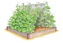 Gardening / #DIYBzz  #BiteSizedBzz
