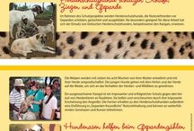 Informationen zu unseren Artenschutzprojekten
