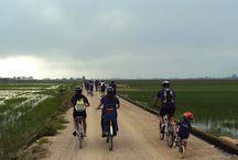 Qué fer a Sant Jaume? / Les activitats que es loden fer al poble de Sant Jaume d'Enveja i al Delta del Ebre; rutes en bicicleta, a cavall, creuers pel riu, passejades per la platja, anar en kaiac...