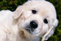dogs / Fotók az ember legjobb barátjáról. A kutyákról :)