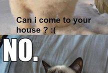 Animals/Grumpy Cat