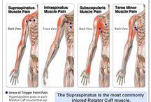 Muskelskjelett Systemet