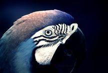 Blue white black parrot