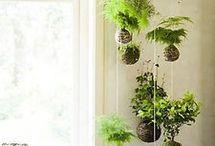 Plante inspirasjon