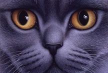 Cats / by Karen - Cat's Eye Originals