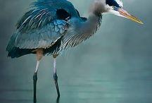 Awesome wildlife