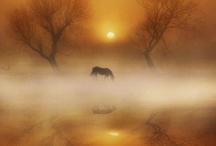 Caii din rai