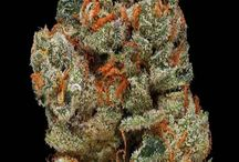 Marijuana Collection / Marijuana is a very usefull plant. People smoke it to relax and for medical issues.