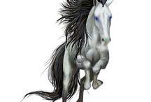 hester som ikke er på nettstallen
