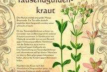 Pflanzenverzeichnis